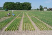 Un test de maïs OGM autorisé, et c'est tout le débat sur le génie génétique qui est relancé